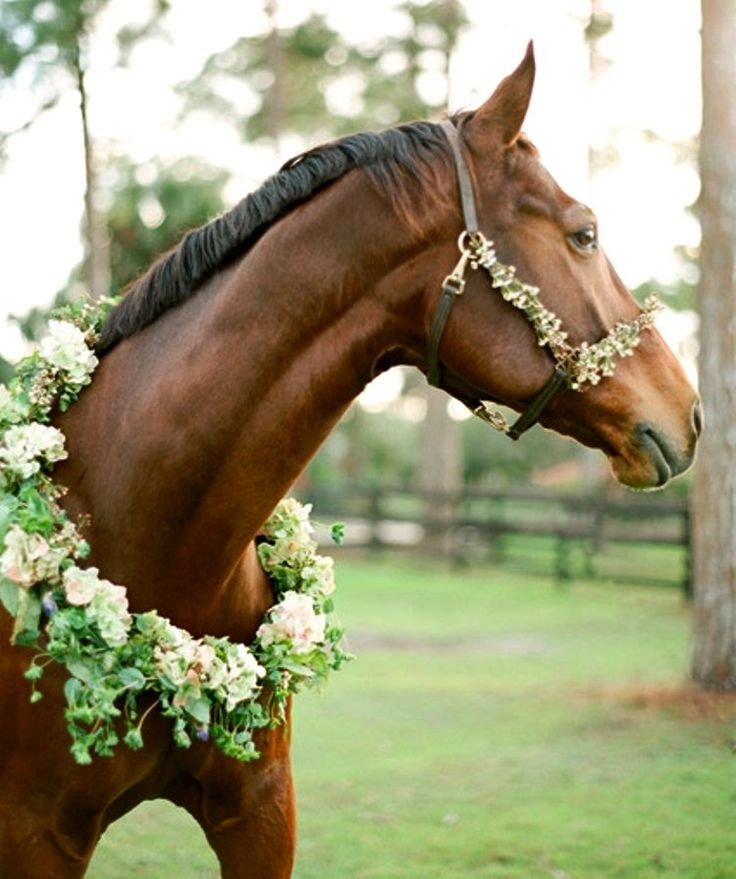 Equestrian Inspired Rustic Engagement - Once Wed                                                                                                                                                                                 More