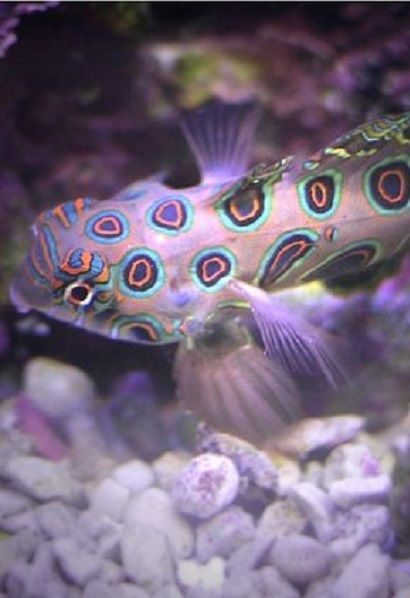 Fish with beautiful markings