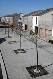 Image result for lime tree square