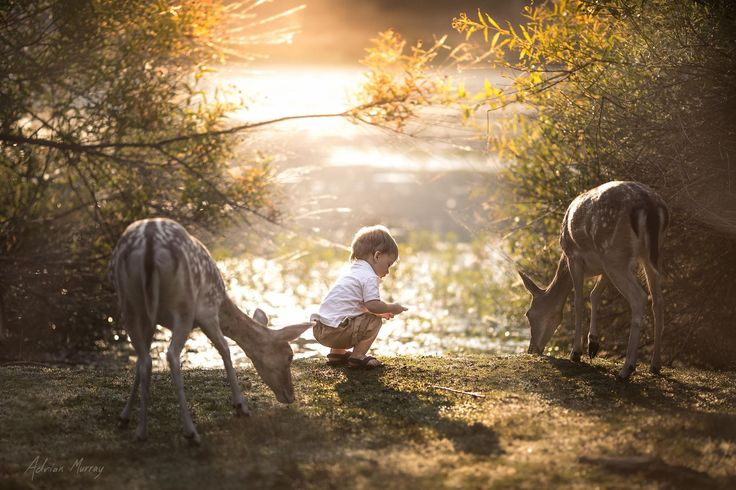 """This is the fourth photo in the  <a href=""""http://500px.com/AdrianMurray/sets/grandmas_house"""">Grandma's House</a> collection. My son did so well with all of the animals around the ranch. We especially liked having the deer around us for most of our walks. I'd like to mention that this, nor any of my images, are composites of multiple photos. These images are composed in the camera. So, yes, my son was only inches away from live deer. :)"""