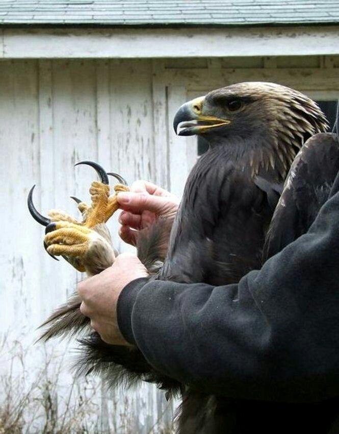 Eagle Talon's claw.. WOW!