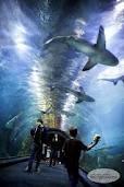 Camden aquarium shark tank