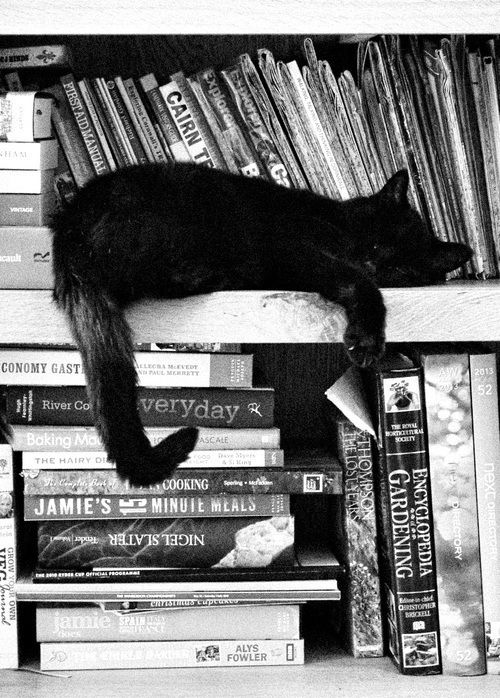 My black cat Juliet does this, but only on the book, newspaper etc... im trying to read! lol..