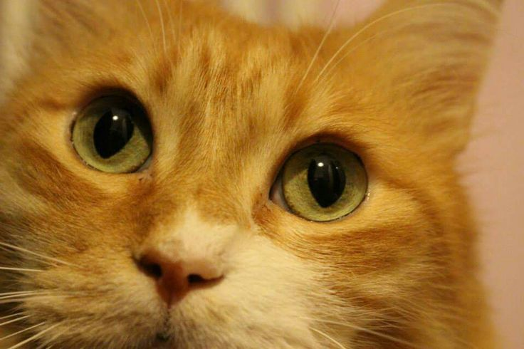 My little love. #cat #pet #lovely