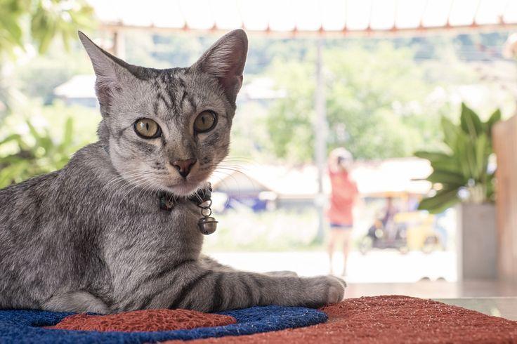 Cats of Thailand | Photo blog Poème Photographique, Laura Lee Moreau