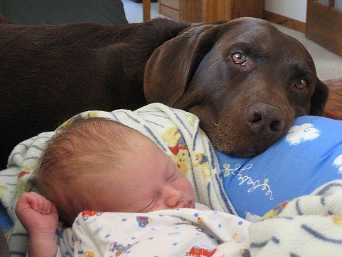 babies with puppies | By Felissa Elfenbein On March 16, 2012 In International Dog News 11 ...