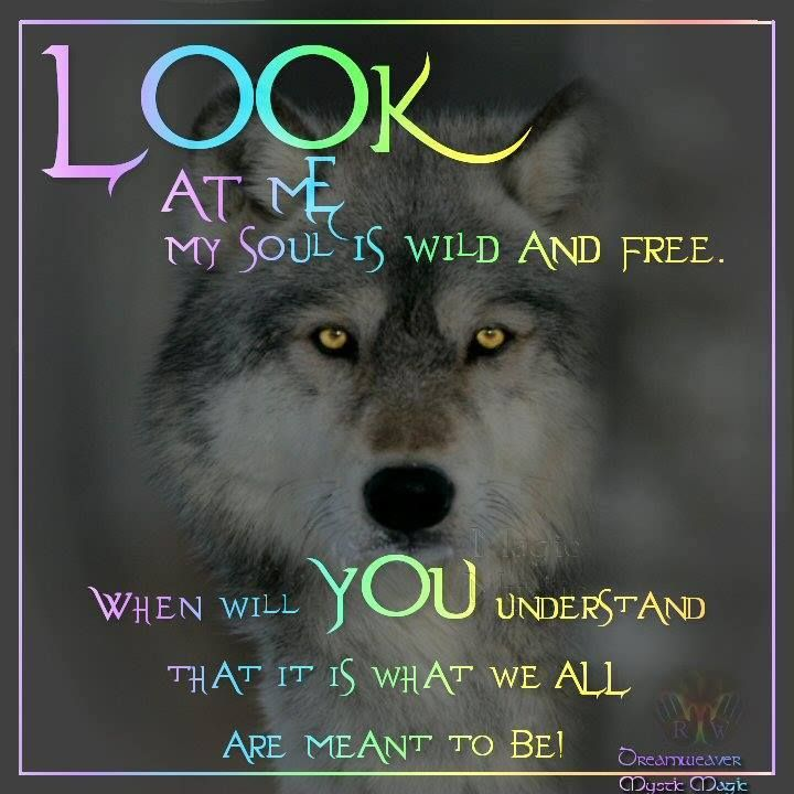 Look at me ~ My soul is wild and free.  When will YOU understand that is what we are meant to be. ~ Dreamweaver, Mystic Magic, FB