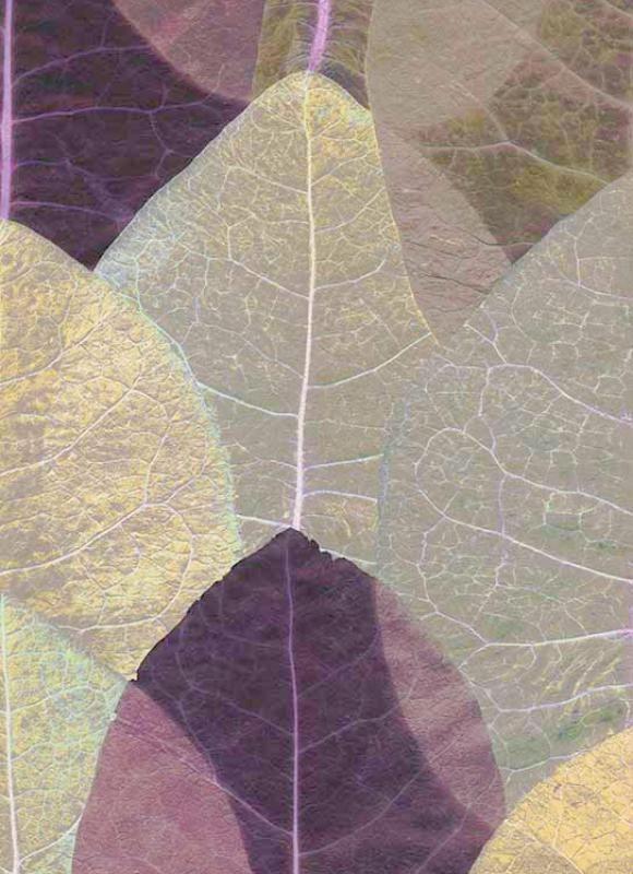 Красивая оригинальная коллекция обоев Countryside от немецкого производителя Erismann Tapeten...  Beautiful wallpaper collection Countryside from Erismann Tapeten of Germany...