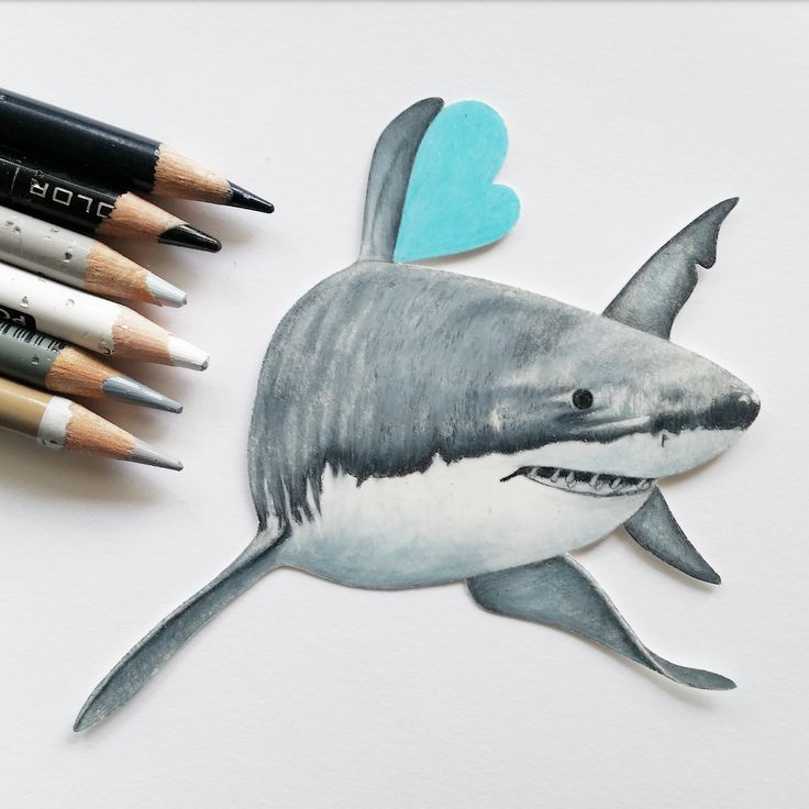 how to draw a great white shark in 3d