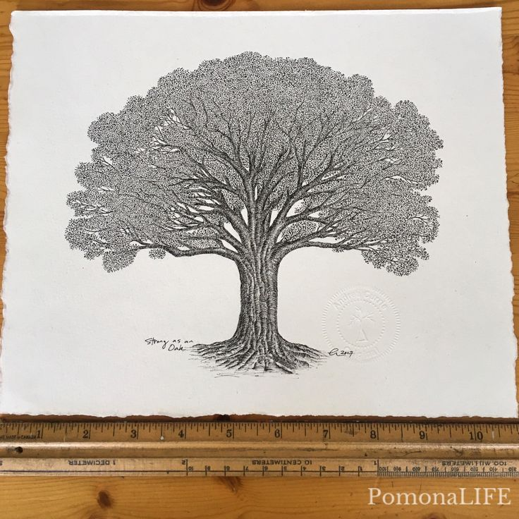 "New Tree Art❤️!  Loved the journey of this piece: ""Strong as an Oak"" Micron pigment on canal jute paper 11x8.5 Original Art for sale, msg or email andrea@pomonalife.com"