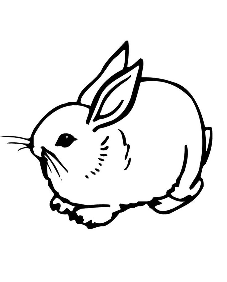 rabbits who were stalking coloring pages