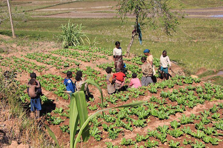#Madagascar - progetto #Voiala: sostieni anche te con il tuo 5×1000 il progetto #Voiala #Averiko #Onlus (90119950278)