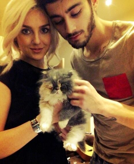 Zayn and Perrie got a kitty. (: they named it Prada!