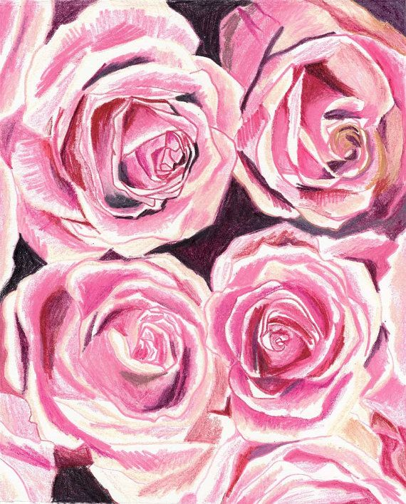 Rose Bouquet Close-up -Original Illustration - in color pencil