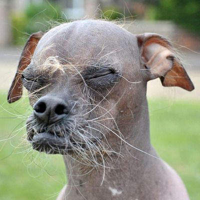 World's ugliest dogs