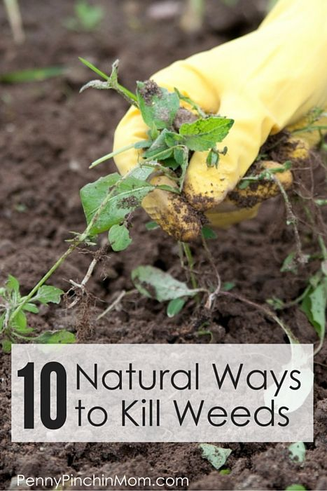 Weeds! We hate them, but who wants to use harsh chemicals?  Get TEN natural ways to kill weeds!!