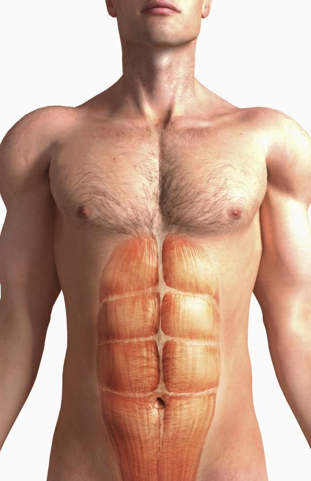 Wait - my Abs should be where?: Rectus Abdominis - The 6 Pack