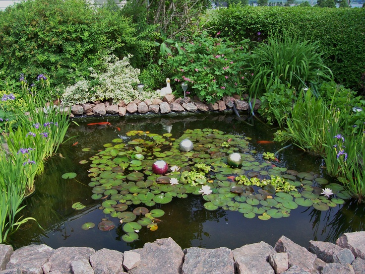 17 best images about goldfish ponds on pinterest growing for Outdoor goldfish pond ideas