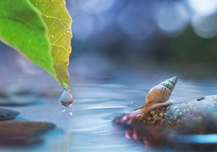 VERY HI-RES PHOTO WALLPAPER!  macro-leaf-drop-water-stone-snail-glare-bokeh-animal-photos.jpg (2048×1438)