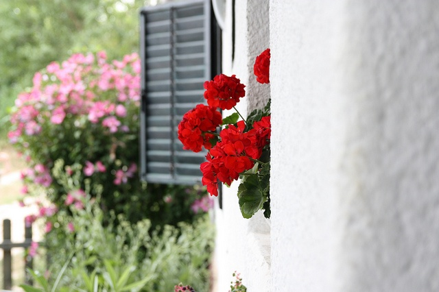 Hungary - house at the Lake Balaton with geranium #hungary