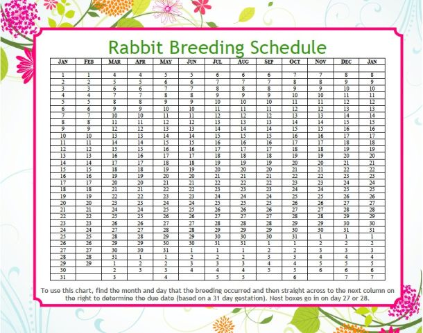 Easy Peasy Rabbit Breeding Schedule