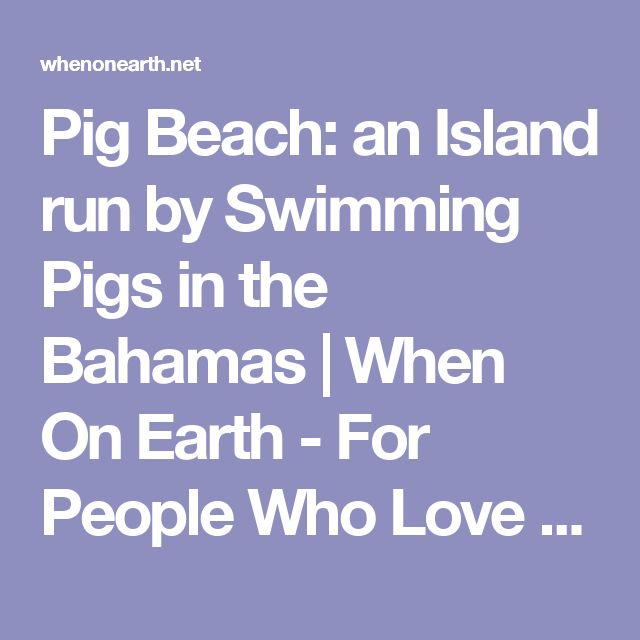 Pig Beach: an Island run by Swimming Pigs in the Bahamas | When On Earth - For People Who Love Travel