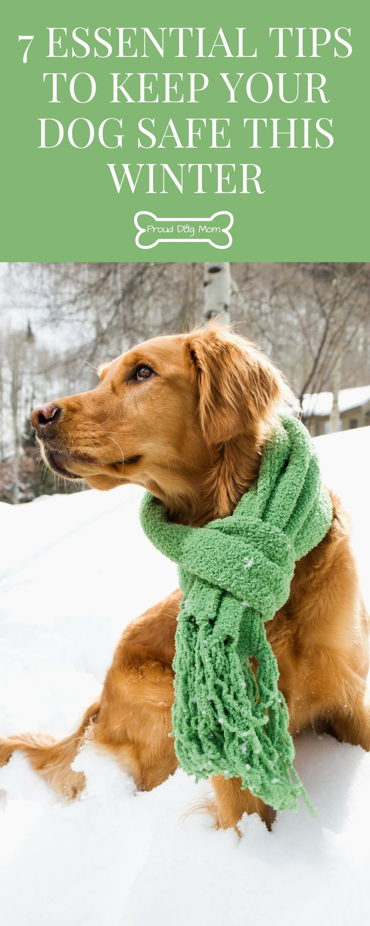 7 Essential Tips to Keep Your Dog Safe This Winter | Dog Health |