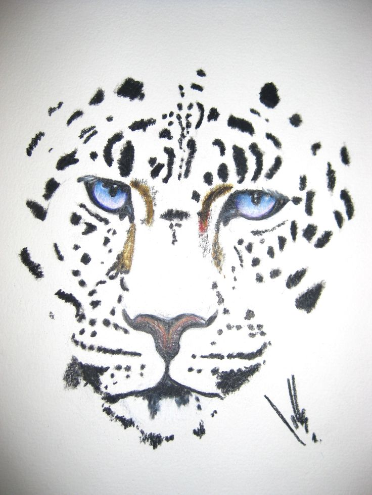"""Snow Leopard"" Coloured Pencil Drawing"