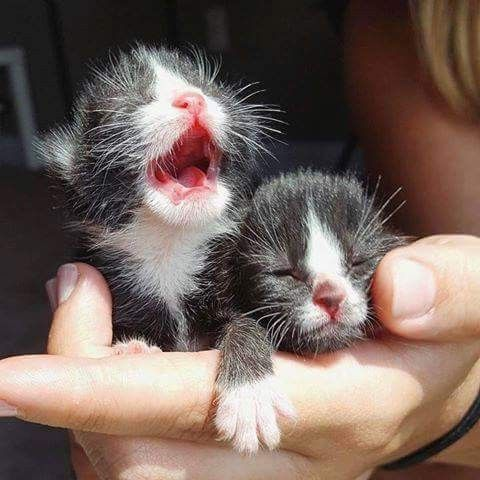 **FACTOID: Kittens eyes open at 10 days old. and like OMG! get some yourself some pawtastic adorable cat apparel!