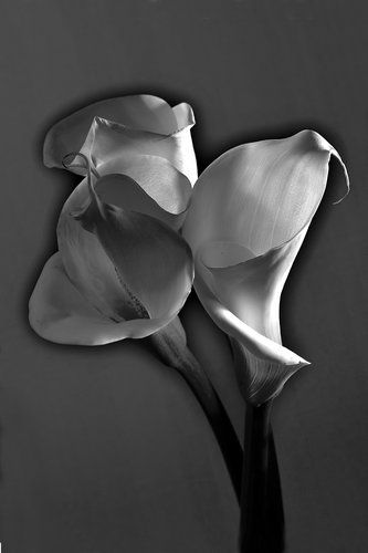 How To Solarize Black and White  Photography - The Sabattier Effect