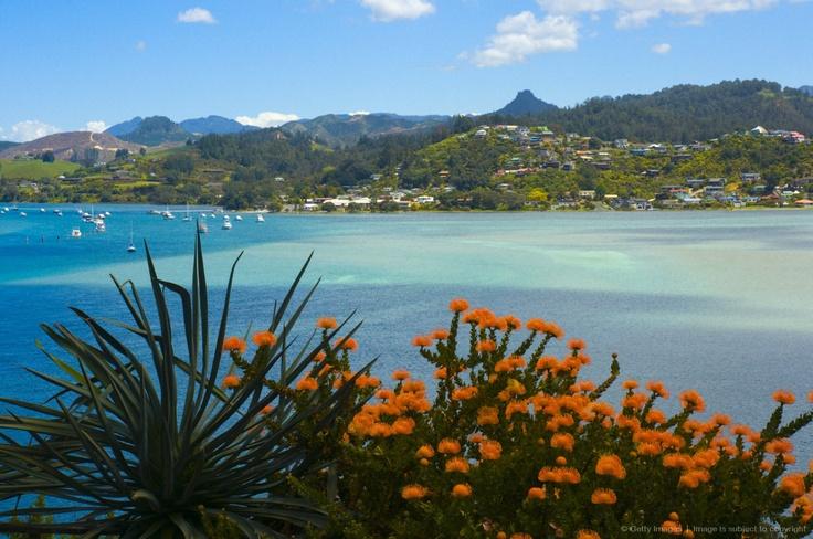 Image detail for -New Zealand, North Island, Coromandel, Tairua Harbour, orange blossom, pincushion protea plant in foreground.