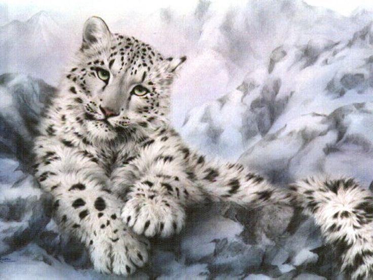 snow leopard | Snow Leopard - The Animal Life