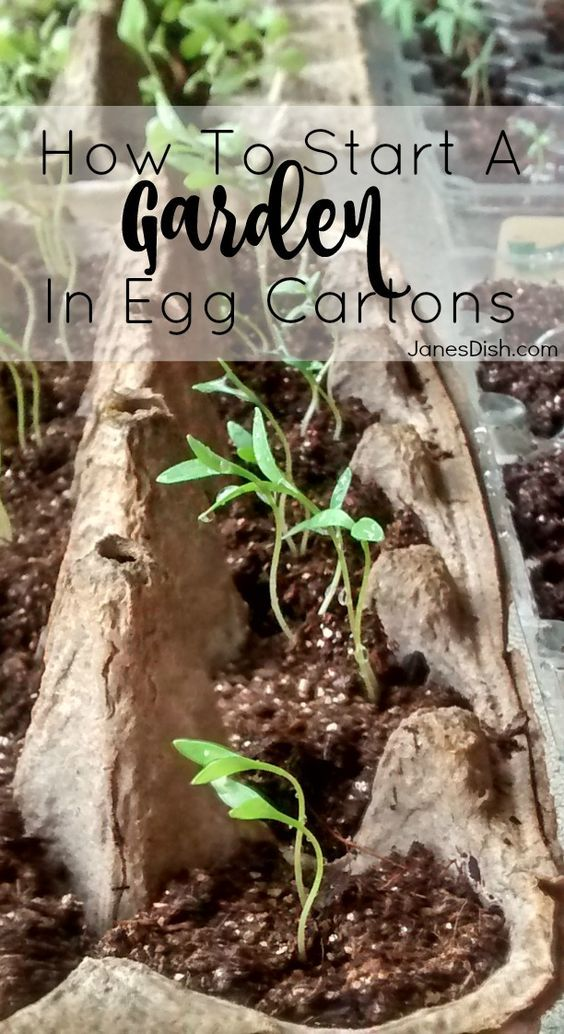 HOW TO START A GARDEN IN EGG CARTONS! Do you want to start a vegetable garden, but don't want to make any major investment in time or money until you actually grow something? Egg carton seed starters are the perfect solution for you!: