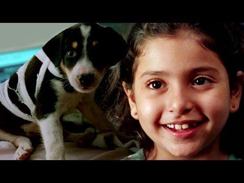 Enjoy Latest Bollywood Hindi Full Movies Super hit children's Great Dog Adventure Comedy Movies Halo is a latest dubbed Hindi version of Superhit South Film Halo Starring : Rajkumar Santoshi, Supriya Pathak, Mukesh Rishi, Viju Khote, Tinu Anand, Benaf Dadachanji, Bulang Raja, Wasim Khan,... https://newhindimovies.in/2017/07/09/bollywood-full-movies-halo-new-hindi-dubbed-movies-latest-kids-animal-film-great-dog-movies/