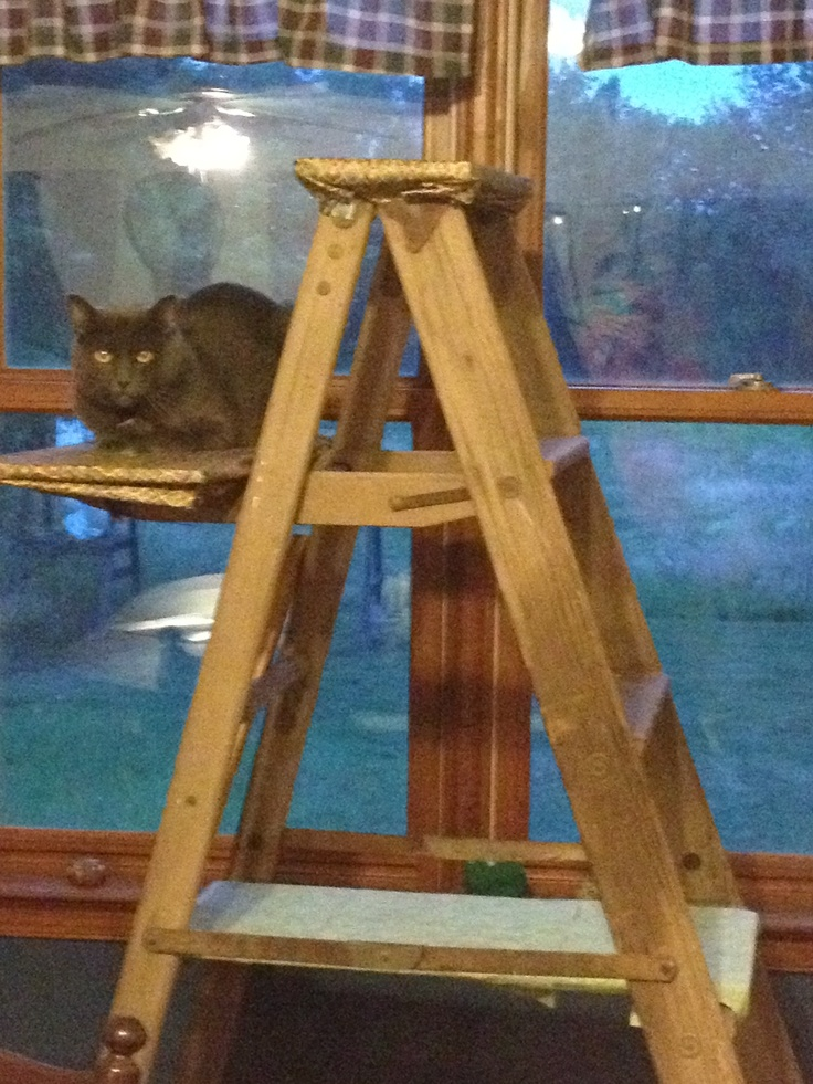142 best images about cat shelves on pinterest for Diy cat playground