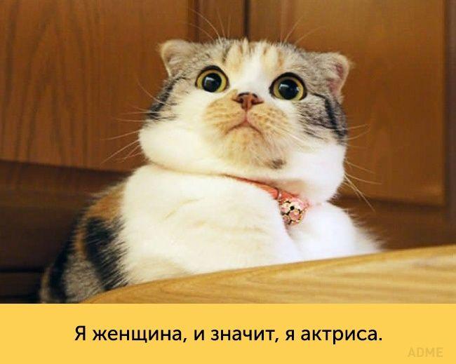Эти кошки — настоящие королевы драмы!