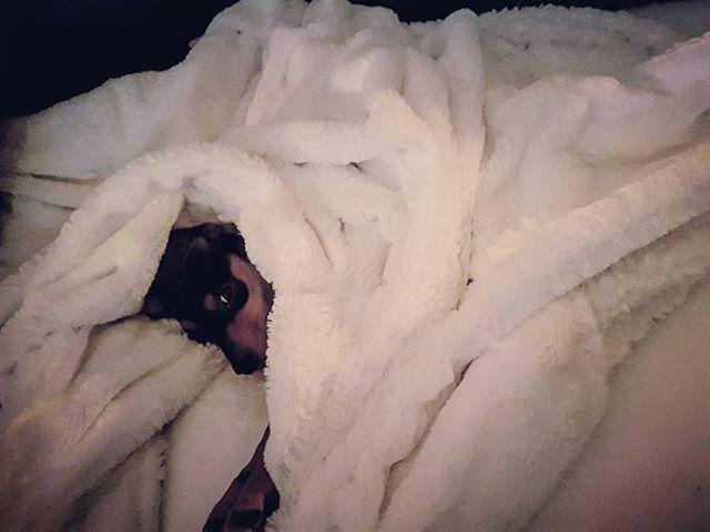 Les photos partagées par les fans d'Alinea : De maa rion : C'est moi ou il fait -10° dehors???? 😁🐶😁 #pinschers #pinschernano #pinschernain #bebenachos🐶 #plaid #alinea #alineaetmoi #homesweethome #hiver #canape #canapes #nachos #🐶 https://www.instagram.com/p/BcIo-kxlSL2/