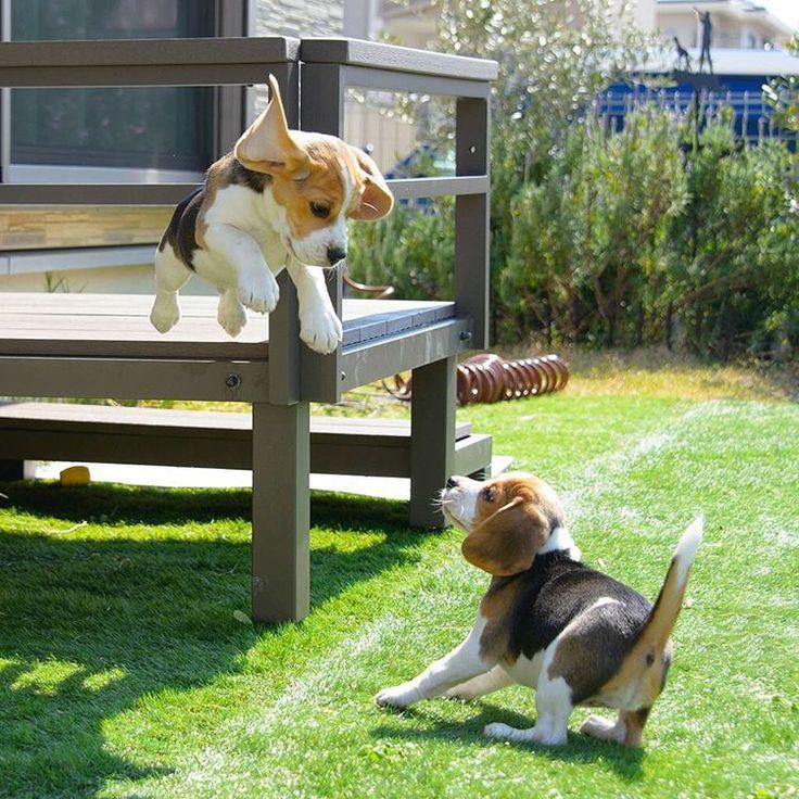 Jump....un perro volador !!