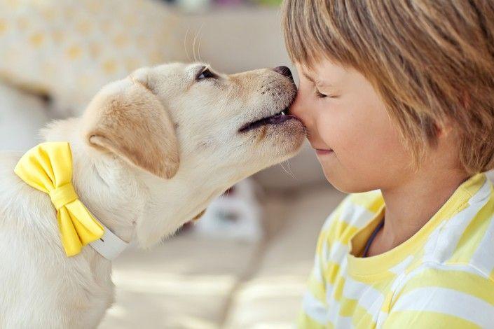 Gezinshonden: welke zijn er? Beeztees maakt de selectie