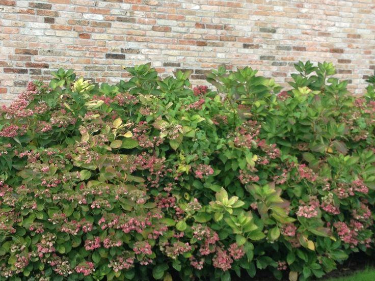 oltre 25 fantastiche idee su piante da ombra su pinterest