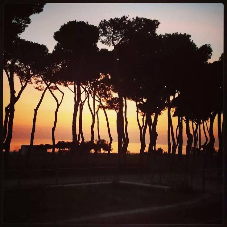 alba in pineta #interntionalcamping #pineto #abruzzo #italy #spiaggia #beach #sea #mare #sabbia #estate #divertimento #allegria #sole #sun #summer