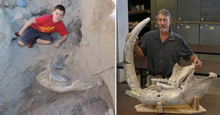 В Нью-Мексико находку ребенка назвали уникальной и ценной для науки, так как ему удалось обнаружить полный череп древнего животного.