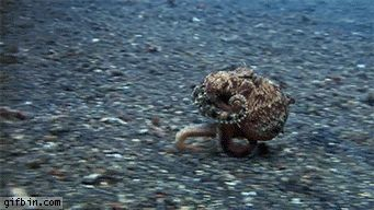 27 Surprisingly Cute Sea Creatures.