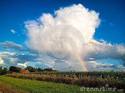 Rainbow on the cloudy sky behind the sunflower fields
