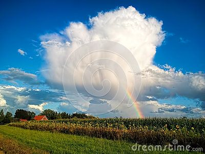 Rainbow on the cloudy sky behind the sunflower fields