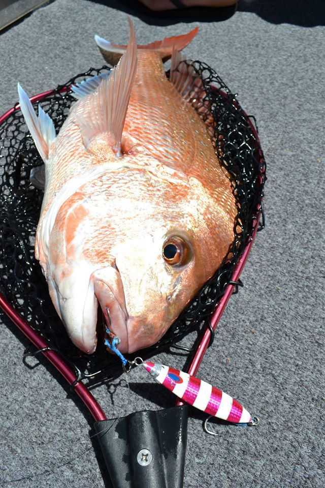 """A hearty Snapper caught on the new MAVEN 6'6"""" 12-20lb GULF series O/H and a Deepliner 130g in pink lumo."""