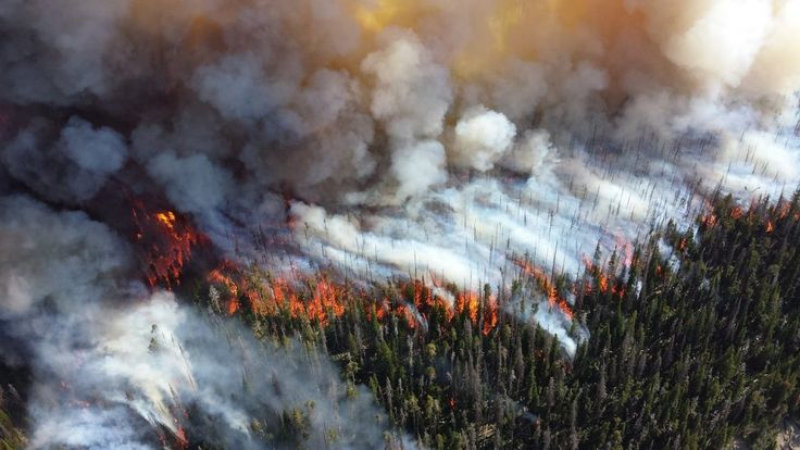 You can blame climate change for more severe forest fires according to a new study in the Proceedings of the National