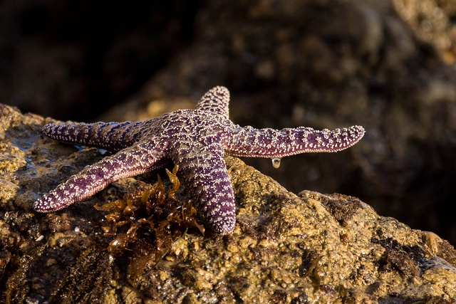 Star Fish by Burnstribe, via Flickr