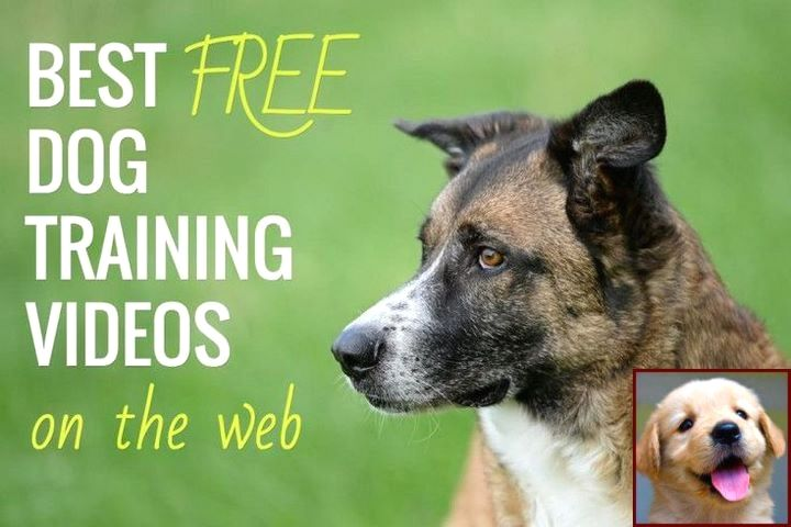 Dog Behavior Training Tips And Dog Training Courses In Chennai