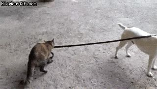 Bossing around the dog. | The 29 Most Cat Things To Ever Happen